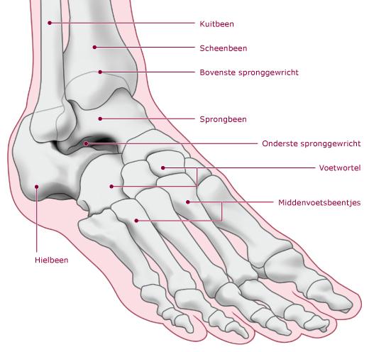 De voet van de mens